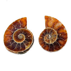 Natural 6.20cts ammonite fossil cabochon 15x12 mm pair loose gemstone s19085