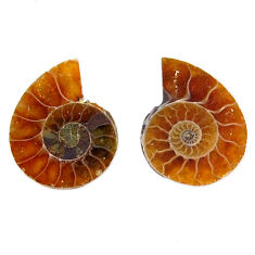Natural 6.35cts ammonite fossil cabochon 15x12 mm pair loose gemstone s19086