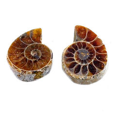 Natural 6.35cts ammonite fossil cabochon 15x12 mm pair loose gemstone s19087
