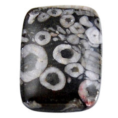 Natural 24.45cts crinoid fossil black cabochon 25x18 mm loose gemstone s19077