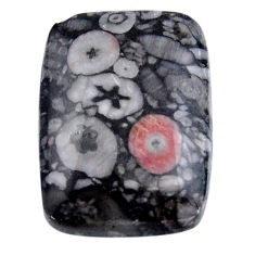 Natural 24.35cts crinoid fossil black cabochon 25x18 mm loose gemstone s19080
