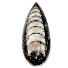 Natural 27.40cts orthoceras black cabochon 35x14 mm pear loose gemstone s23274