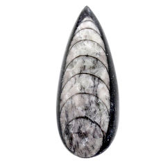 Natural 28.40cts orthoceras black cabochon 37x13.5 mm pear loose gemstone s23264