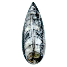 Natural 26.20cts orthoceras black cabochon 39x13.5 mm pear loose gemstone s23295