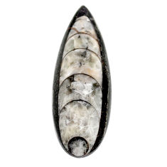 Natural 28.45cts orthoceras black cabochon 40x14 mm pear loose gemstone s23262