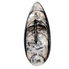 Natural 27.40cts orthoceras black cabochon 40x14 mm pear loose gemstone s23266
