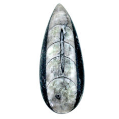 Natural 24.35cts orthoceras black cabochon 40x14 mm pear loose gemstone s23300