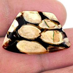 Natural 16.30cts peanut petrified wood fossil 26x17 mm loose gemstone s23240