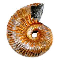 Natural 11.85cts russian jurassic opal ammonite 18x13.5 mm loose gemstone s19648