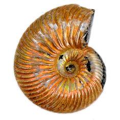 Natural 15.10cts russian jurassic opal ammonite 18x14 mm loose gemstone s19641
