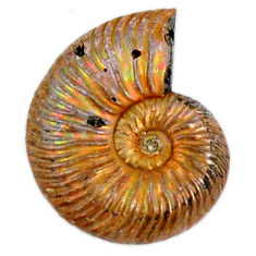 Natural 15.25cts russian jurassic opal ammonite 18x14 mm loose gemstone s19643