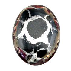 Natural 32.95cts septarian gonads black cabochon 32x23 mm loose gemstone s22508