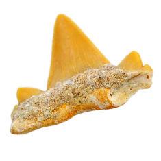 Natural 10.15cts shark teeth brown cabochon 26x23 mm loose gemstone s19091