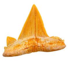Natural 13.45cts shark teeth brown cabochon 26x25 mm loose gemstone s19090