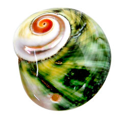 Natural 41.30cts turbo seashell green cabochon 33.5x26.5mm loose gemstone s18945