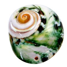 Natural 42.40cts turbo seashell green cabochon 34x28.5 mm loose gemstone s18955