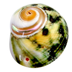 Natural 53.10cts turbo seashell green cabochon 35x29 mm loose gemstone s18953