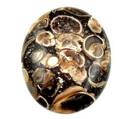 turritella fossil snail agate 25x20 mm loose gemstone s16989