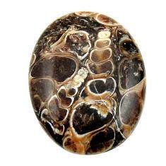turritella fossil snail agate 26x20 mm loose gemstone s16995