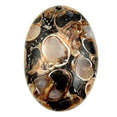 turritella fossil snail agate 28x18 mm loose gemstone s16997
